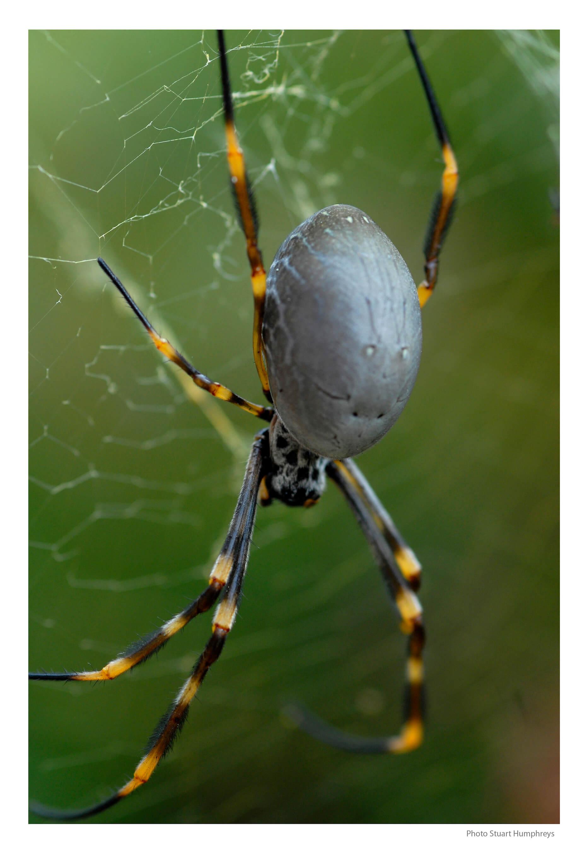 Sydney exhibit spider